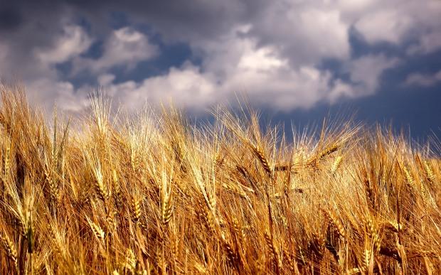 Crédit photo: WallPaperPi (http://wallpaperlepi.com/downloadsites/wheat-field-sky-wallpaper-hd-885.html)